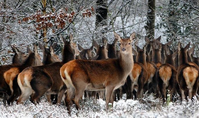 В Челябинской области браконьеры получили реальные сроки за добычу косуль и лося