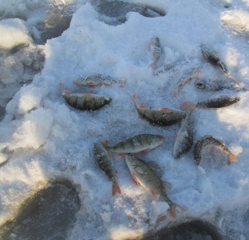 Праздничная рыбалка на Кантегире