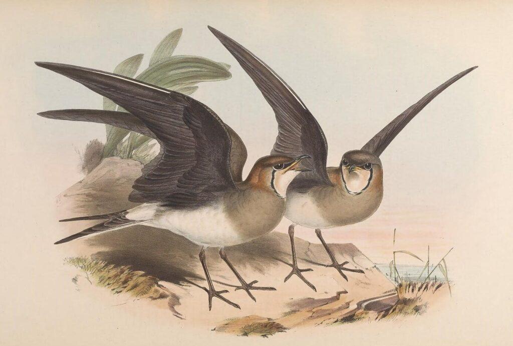 Заметки о содержании некоторых птиц в неволе