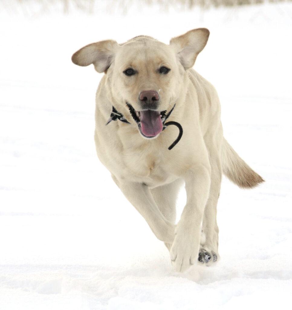 Какую же собаку можно держать дома? Часть первая