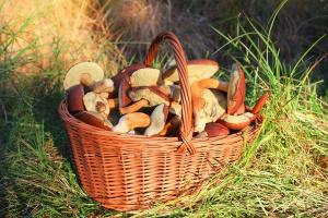 Минприроды России опровергло слухи об ограничениях на сбор ягод и грибов
