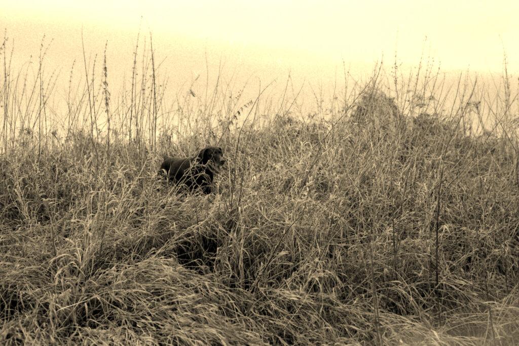 Охота в Шурмаше. Часть первая
