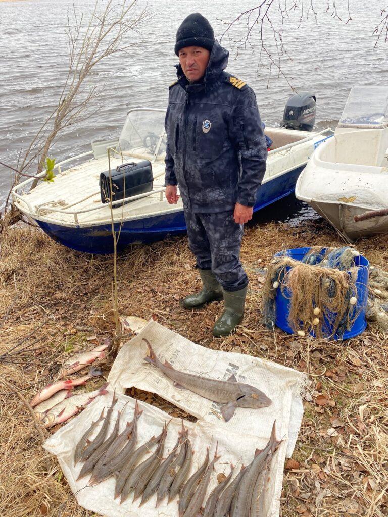 В Югре поймали браконьеров на ловле осетра и стерляди