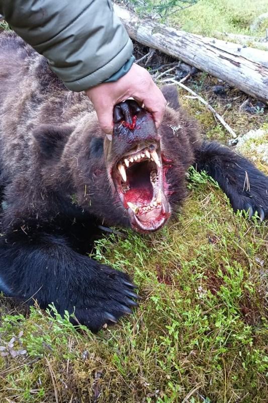 В Красноярском крае медведь напал на группу туристов