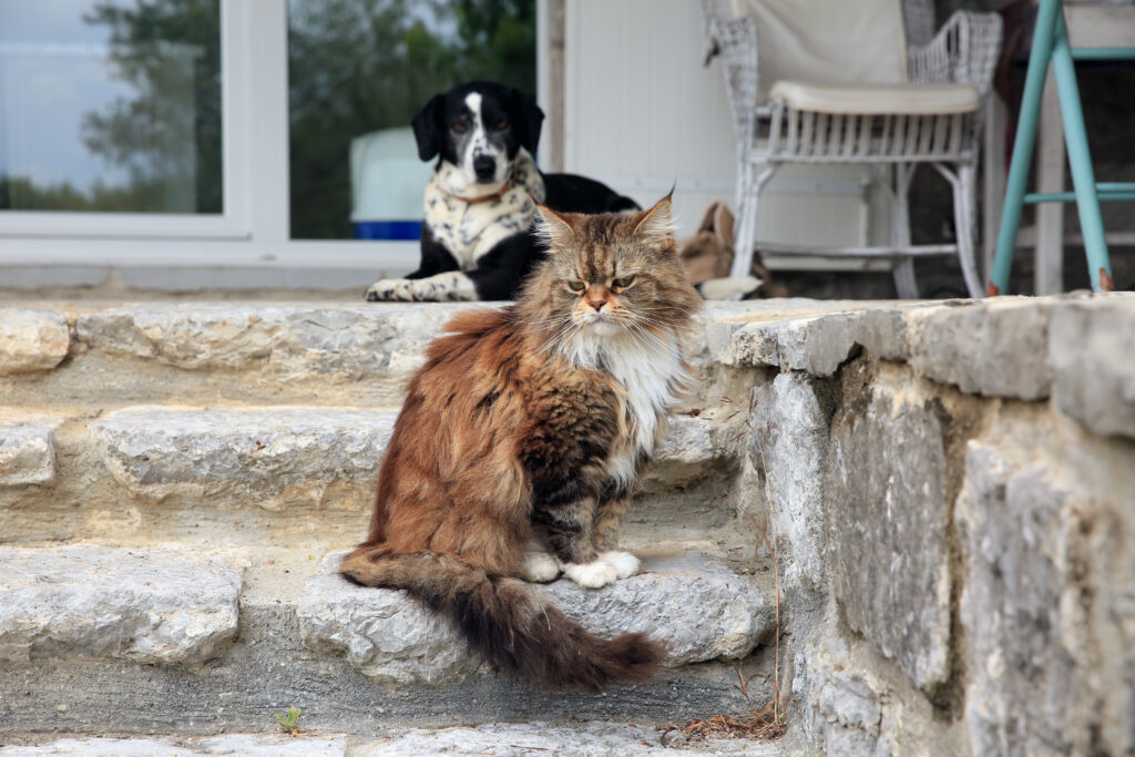 Как кошка с собакой. Часть пятая