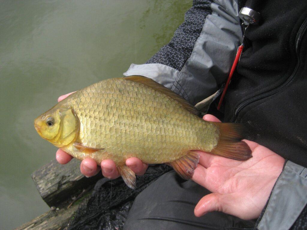 Рыбалка у Красноселки
