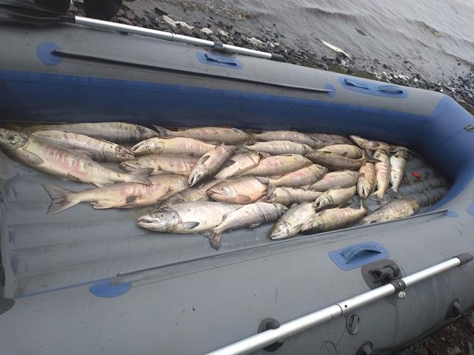 В Хабаровском крае вынесен приговор за незаконный лов лососевых