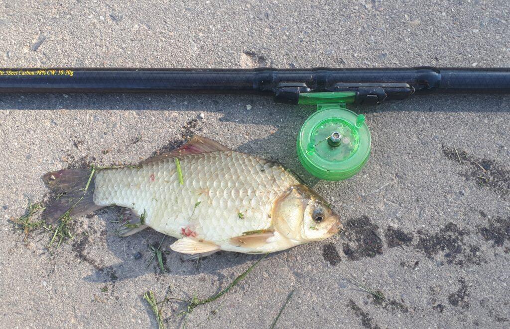 Рыбалка в первой половине лета