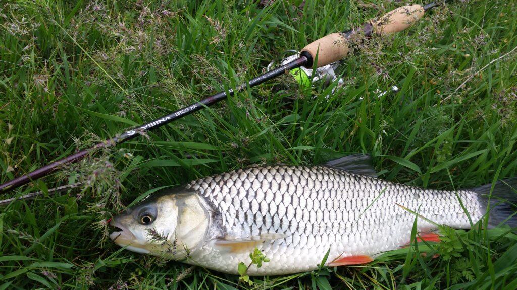 Сазанья рыбалка в июле