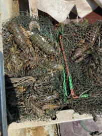 СОБР задержал браконьеров-раколовов в Самарской области