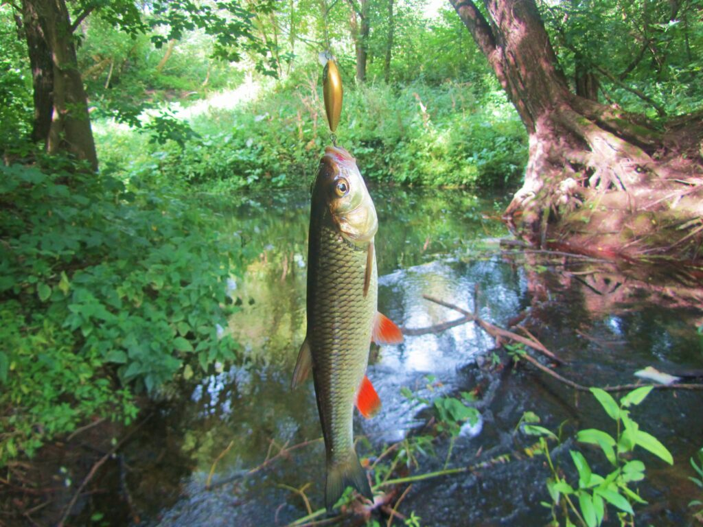 Спиннинг на малых реках: советы начинающим