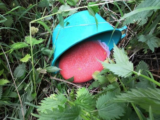В Хабаровском крае браконьеры заготовили десятки килограммов икры