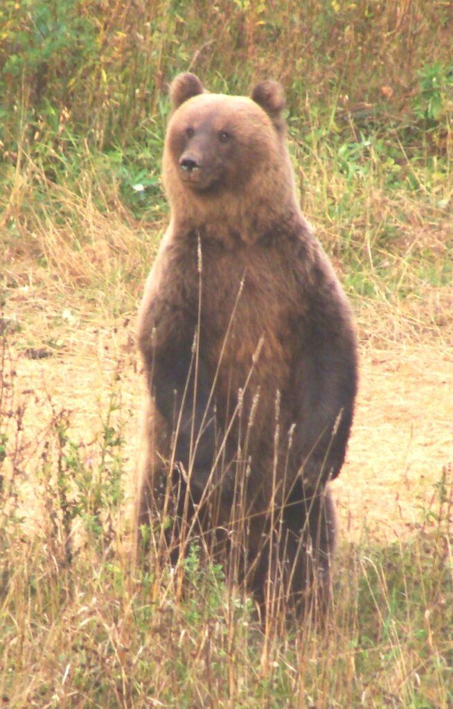 Случай на медвежьей охоте