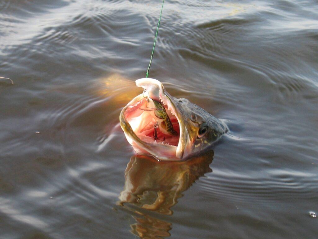 Удачная рыбалка. Часть первая