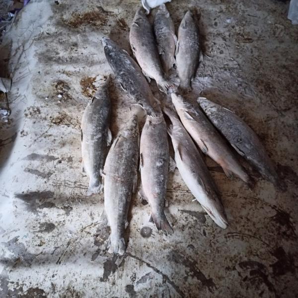 Браконьер наловил в Баренцевом море на 2 млн рублей