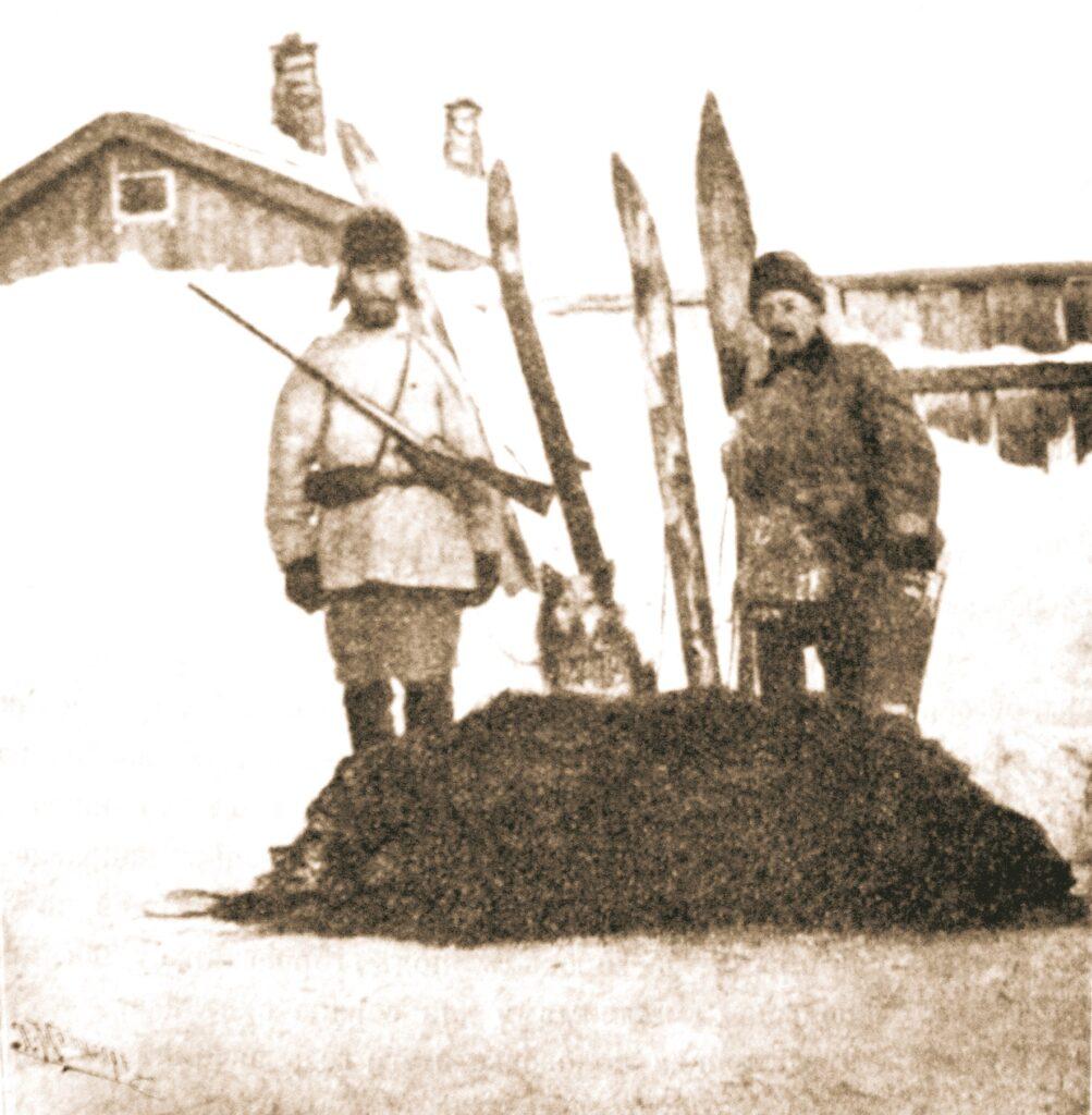 Охота на медведя в Сибири с лайками