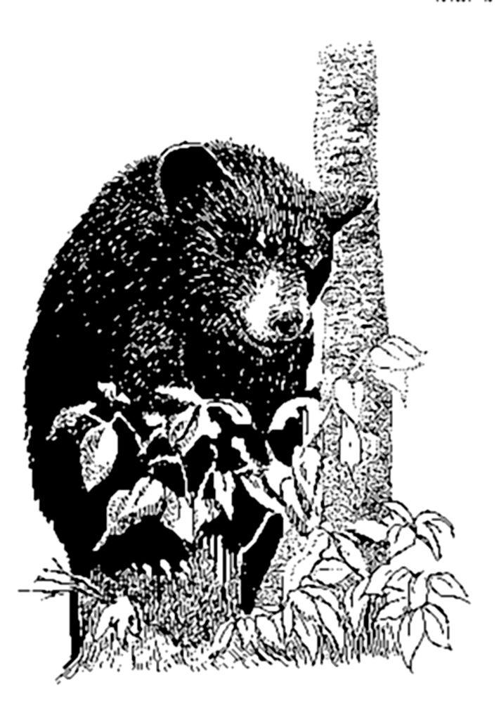 Медвежья кулема