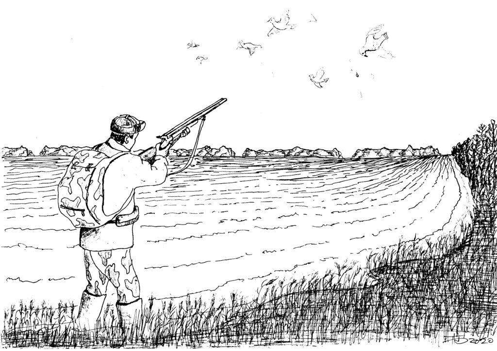 Вяхирь — сизая мечта охотника