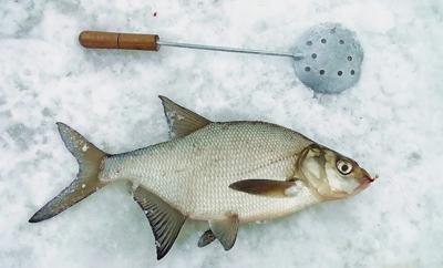 где ловить уклейку на рузском водохранилище