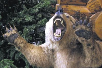 фото разъярённого медведя