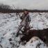 лосиная охота