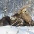 промысловая охота в Якутии