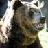 добыть медведя