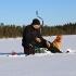 Собака на зимней рыбалке