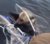 спасли медвежонка