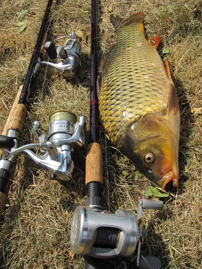 карповая рыбалка купить